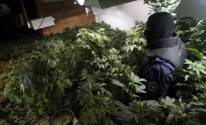 2 Baja California state police stand guard at a captured marijuana greenhouse in the basement of a ranch in Tecate, Mexico on March 12, 2009. (REUTERS/Jorge Duenes)